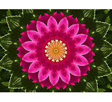 Beach Rose Kaleidoscope. Photographic Print