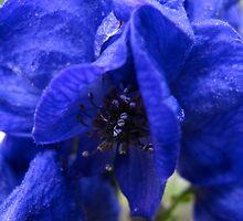 Royal Blue Delphinium by MarianBendeth