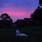 Enjoying The Sunset With Your Dog