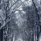 Winter Trees, Washington D.C.  by Alberto  DeJesus