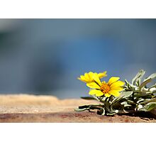 Little Yellow Flower by the Seaside Photographic Print