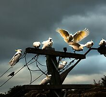 Crowded perch by marzipan
