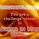 Banner Challenge  for Flowers in Macro Group by vigor