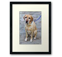 Gipper Lab Retriever Dog By Jonathan Green Framed Print