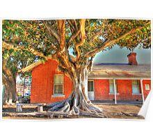 """Moreton Bay Fig Tree"" Poster"