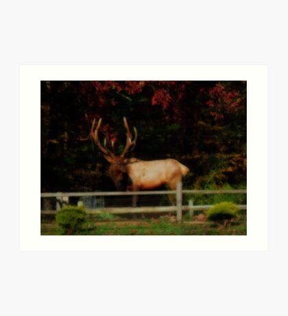 Bull Elk, PA Art Print
