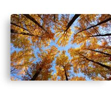 looking up to fall Canvas Print