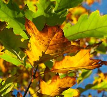 Autumn Leaves by evisonphoto