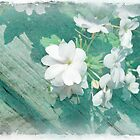 White Impatiens by Rozalia Toth