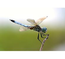 Amazing Blue Dasher Photographic Print