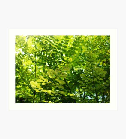 Green Zone Art Print