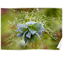 Rain Drops on a Blue Flower Poster