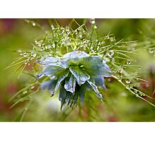 Rain Drops on a Blue Flower Photographic Print