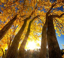 Upward to Autumn by Bob Larson