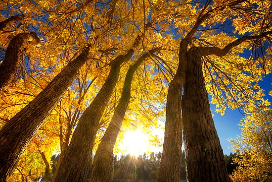 Upward to Autumn by Bob Larson
