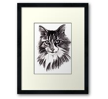 Sookie - the Maine Coon cat Framed Print