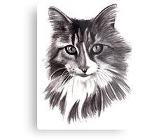 Sookie - the Maine Coon cat Metal Print