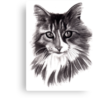 Sookie - the Maine Coon cat Canvas Print