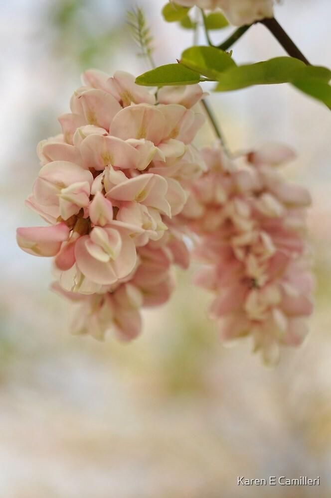 Spring Quiet by Karen E Camilleri