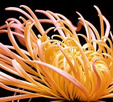 Flowers of Autumn - Graceful Curves 7 by Jackson Hung