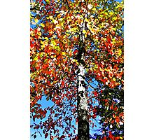 Tree of Colors Photographic Print