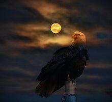 Moonlight Sonata ll by Gail Bridger