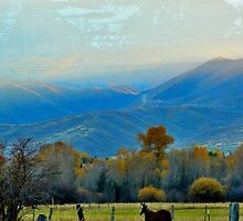 Horse  by JoAnn Glennie