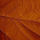Autumn Leaf by Alex Colcheedas
