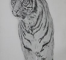 Tiger by Feagaer