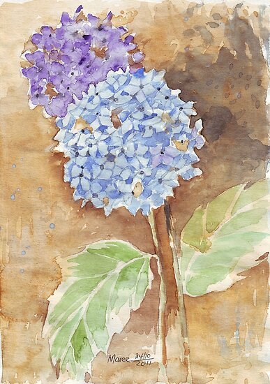 The Hydrangea by Maree  Clarkson
