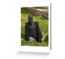 Eastern Lowland Gorilla, Melbourne Zoo Greeting Card