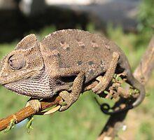 Chameleon 1 by IrinaBudovsky