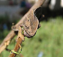 Chameleon 3 by IrinaBudovsky