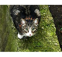 Have you seen my mouse? Photographic Print