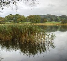 Esthwaite Water..At The Margins by Jamie  Green