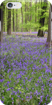 Bluebells in woods for iPhone by Philip Mitchell