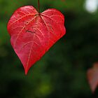 Red Leaf by John Dalkin