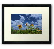 Sunflower Glory Framed Print