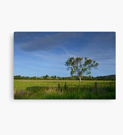 Mary Valley Country Canvas Print