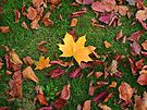 Autumn Leaves by Artberry