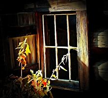 The Old Window by RickDavis