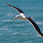 albatross by dpbphotography