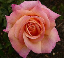 Rose Garden 5 by beeden