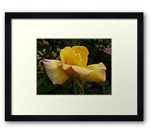 Rose Garden 10 Framed Print