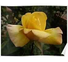 Rose Garden 10 Poster