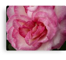 Rose Garden 11 Canvas Print