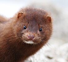American mink by Alinka