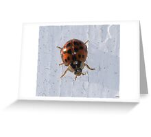 Harlequin Greeting Card