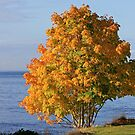 Autumn by the Sea  by TerrillWelch