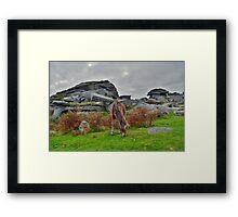 Dartmoor: Pony at Pew Tor Framed Print